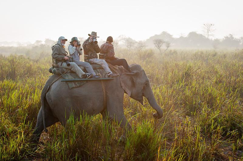 elephant ride in Kaziranga to get close to the rhino