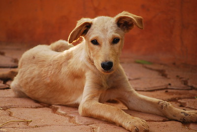 Shilparamam market puppy