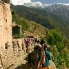 Taking the cows to graze, in the Pir Panjal range of the Himalaya in Chamba District, Himachal Pradesh