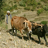 Plowing the traditional way in Chamba, Himachal Pradesh