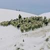 Gaddi shepherds negotiate the Rohtang Pass with their flock, Himachal Pradesh, India