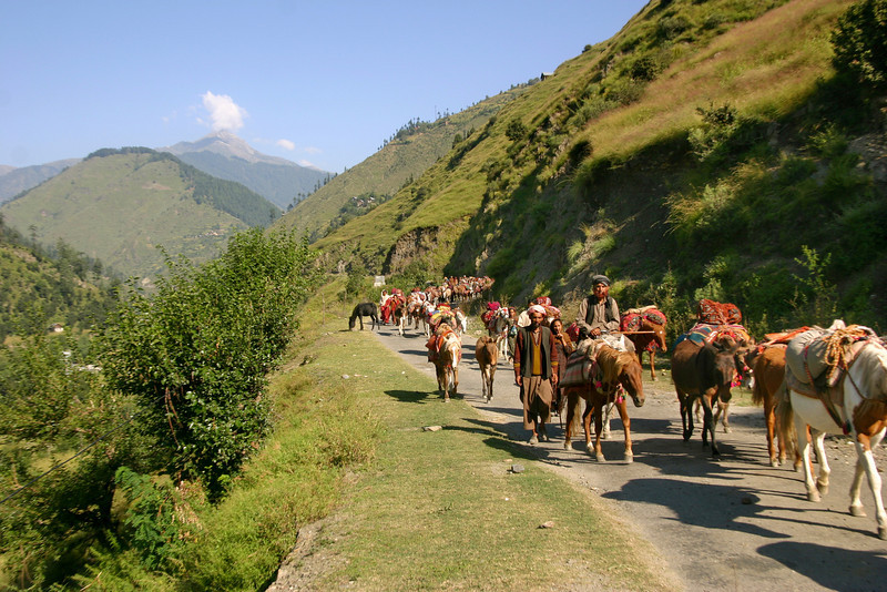Bakarwal families on migration from their summer pastures to their winter homes