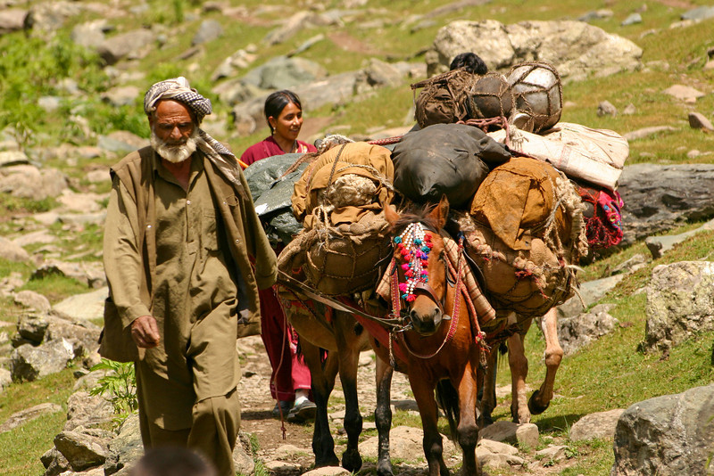 This shepherd family has loaded all their belongings onto their horses for the long migration down to their winter home. The journey might take them four weeks or more.