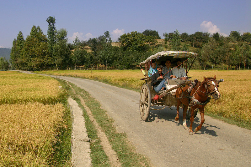 A horse cart provides an effective and cheap means of transportation in rural areas of Kashmir
