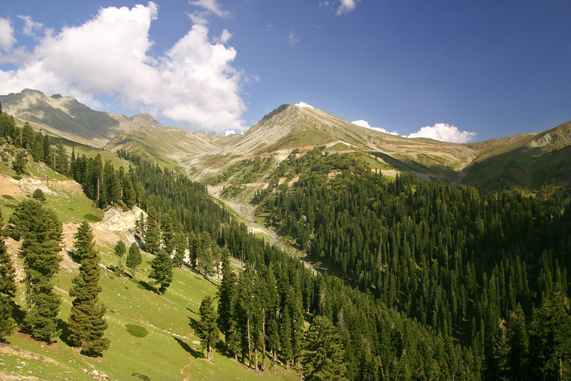 The beautiful forests of South Kashmir