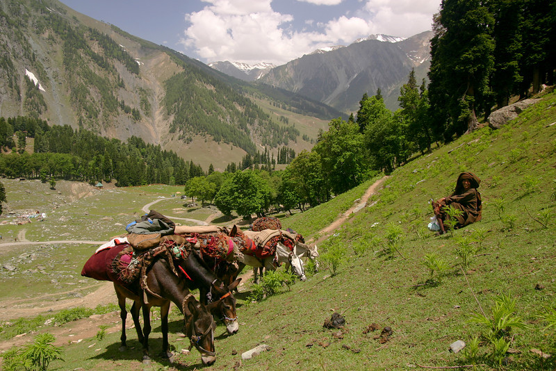 A Bakarwal family on migration near Sonamarg, Kashmir lets their pack horses take a break