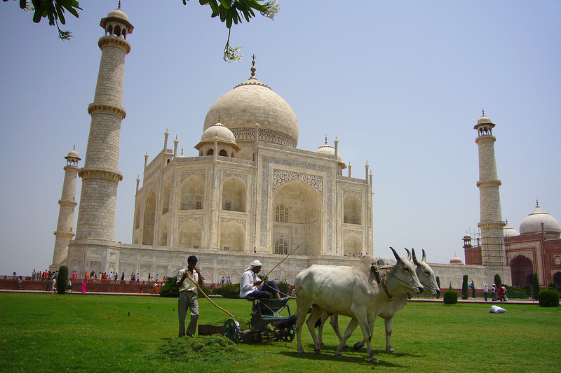 Photo courtesy of Martin and Marcus. Mowing the lawn of the Taj Mahal, Agra.