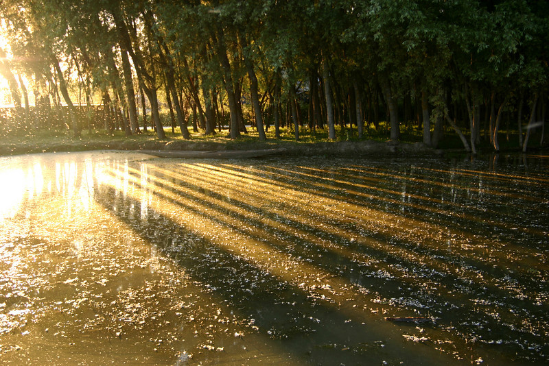 One evening in Srinagar, millions of white seeds were floating through the air, probably from some kind of tree, and it made for a picturesque sunset