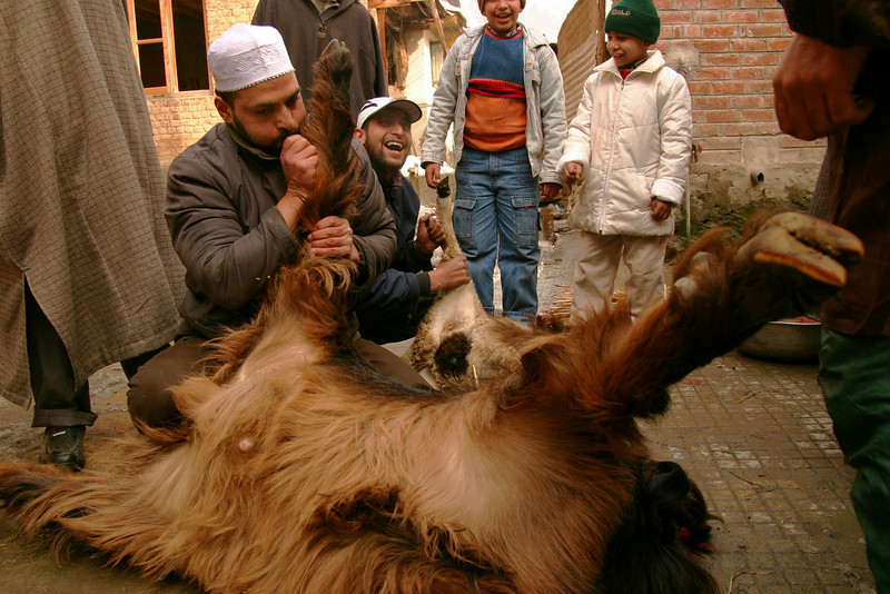 After slaughtering the goat, this gentleman proceeded to blow through a slit in the ankle in order to inflate the skin and quickly separate it from the body. Ingenious!