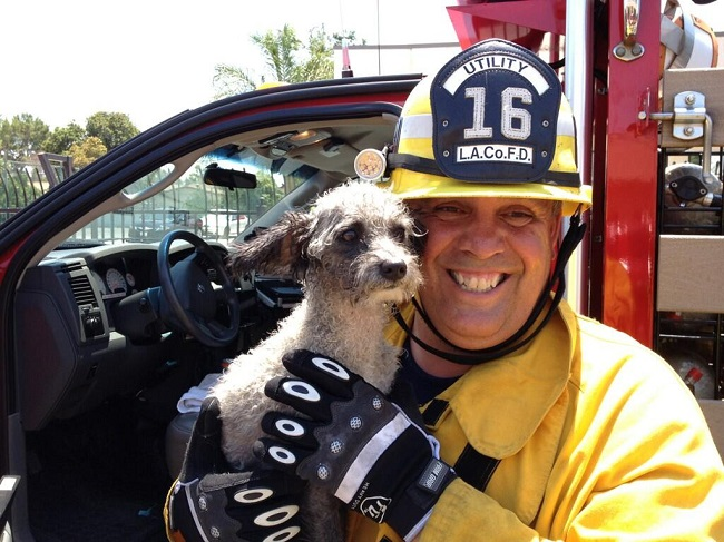 Description of . A puppy that was saved by firefighters during a commercial fire in Industry. Photo Courtesy of the Los Angeles County Fire Department.