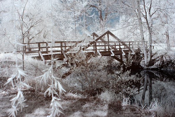 Walking Bridge - Morton Arboretum - False Color Infrared