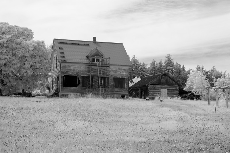 An old pioneer farmhouse in a field is being repaired with a new roof and siding. In black and white infrared.