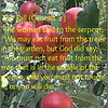 "*Note: No mentioned the ""fruit"" was actually an apple..<br /> <br /> ""The Apple Theory<br /> <br /> How did the apple, which is not indigenous to ancient Israel, come to be associated with the Garden of Eden? According to many biblical scholars, the mistake comes from a faulty translation.<br /> <br /> In modern Hebrew, an apple is called a tapuach. In the Bible, however, this word refers to a tree with a scented fruit, maybe an apricot or a quince. Thus, when the Bible says, ""Under the tapuach I roused you"" (Song of Songs 8:5), a correct translation would be, ""Under a tree with a scented fruit, I roused you."" Yet in most English Bible translations we find, ""Under the apple tree I roused you.""  <a href=""http://reformjudaismmag.org/Articles/index.cfm?id=3312"">http://reformjudaismmag.org/Articles/index.cfm?id=3312</a><br /> <br /> The Fall (Genesis 3)<br /> <a href=""http://www.biblegateway.com/passage/?search=Genesis%203&version=NIV"">http://www.biblegateway.com/passage/?search=Genesis%203&version=NIV</a><br /> <br /> 3 Now the serpent was more crafty than any of the wild animals the Lord God had made. He said to the woman, ""Did God really say, 'You must not eat from any tree in the garden'?""<br /> <br /> 2 The woman said to the serpent, ""We may eat fruit from the trees in the garden, 3 but God did say, 'You must not eat fruit from the tree that is in the middle of the garden, and you must not touch it, or you will die.'""<br /> <br /> 4 ""You will not certainly die,"" the serpent said to the woman. 5 ""For God knows that when you eat from it your eyes will be opened, and you will be like God, knowing good and evil.""<br /> <br /> 6 When the woman saw that the fruit of the tree was good for food and pleasing to the eye, and also desirable for gaining wisdom, she took some and ate it. She also gave some to her husband, who was with her, and he ate it. 7 Then the eyes of both of them were opened, and they realized they were naked; so they sewed fig leaves together and made coverings for themselves.<br /> <br /> 8 Then the man and his wife heard the sound of the Lord God as he was walking in the garden in the cool of the day, and they hid from the Lord God among the trees of the garden. 9 But the Lord God called to the man, ""Where are you?""<br /> <br /> 10 He answered, ""I heard you in the garden, and I was afraid because I was naked; so I hid.""<br /> <br /> 11 And he said, ""Who told you that you were naked? Have you eaten from the tree that I commanded you not to eat from?""<br /> <br /> 12 The man said, ""The woman you put here with me—she gave me some fruit from the tree, and I ate it.""<br /> <br /> 13 Then the Lord God said to the woman, ""What is this you have done?""<br /> <br /> The woman said, ""The serpent deceived me, and I ate.""<br /> <br /> 14 So the Lord God said to the serpent, ""Because you have done this,<br /> <br /> ""Cursed are you above all livestock<br />     and all wild animals!<br /> You will crawl on your belly<br />     and you will eat dust<br />     all the days of your life.<br /> 15 And I will put enmity<br />     between you and the woman,<br />     and between your offspring[a] and hers;<br /> he will crush[b] your head,<br />     and you will strike his heel.""<br /> <br /> 16 To the woman he said,<br /> <br /> ""I will make your pains in childbearing very severe;<br />     with painful labor you will give birth to children.<br /> Your desire will be for your husband,<br />     and he will rule over you.""<br /> <br /> 17 To Adam he said, ""Because you listened to your wife and ate fruit from the tree about which I commanded you, 'You must not eat from it,'<br /> <br /> ""Cursed is the ground because of you;<br />     through painful toil you will eat food from it<br />     all the days of your life.<br /> 18 It will produce thorns and thistles for you,<br />     and you will eat the plants of the field.<br /> 19 By the sweat of your brow<br />     you will eat your food<br /> until you return to the ground,<br />     since from it you were taken;<br /> for dust you are<br />     and to dust you will return.""<br /> <br /> 20 Adam[c] named his wife Eve,[d] because she would become the mother of all the living.<br /> <br /> 21 The Lord God made garments of skin for Adam and his wife and clothed them. 22 And the Lord God said, ""The man has now become like one of us, knowing good and evil. He must not be allowed to reach out his hand and take also from the tree of life and eat, and live forever."" 23 So the Lord God banished him from the Garden of Eden to work the ground from which he had been taken. 24 After he drove the man out, he placed on the east side[e] of the Garden of Eden cherubim and a flaming sword flashing back and forth to guard the way to the tree of life.<br /> <br /> Good News Sin<br /> <a href=""https://www.facebook.com/groups/189301851255458/"">https://www.facebook.com/groups/189301851255458/</a>"