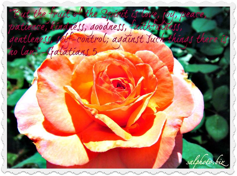 "But the fruit of the Spirit is love, joy, peace, patience, kindness, goodness, faithfulness, 23 gentleness, self-control; against such things there is no law.-Galatians 5<br /> <br /> <a href=""http://www.biblegateway.com/passage/?search=Galatians%205&version=ESV"">http://www.biblegateway.com/passage/?search=Galatians%205&version=ESV</a><br /> <br /> more...<br /> <a href=""http://life.goodnewseverybody.com"">http://life.goodnewseverybody.com</a><br /> <br /> <a href=""https://twitter.com/GoodnewsUSAinfo/status/706130501560438784"">https://twitter.com/GoodnewsUSAinfo/status/706130501560438784</a><br /> <br /> *original...<br /> <a href=""http://salphotobiz.smugmug.com/Flowers/Como-Park-Conservatory/18064289_F9FCM9#!i=2646262413&k=XL9v9Mw"">http://salphotobiz.smugmug.com/Flowers/Como-Park-Conservatory/18064289_F9FCM9#!i=2646262413&k=XL9v9Mw</a><br /> <br /> <a href=""https://www.instagram.com/p/Bnu4SMUBg0U/?taken-by=creativemusicartsy"">https://www.instagram.com/p/Bnu4SMUBg0U/?taken-by=creativemusicartsy</a>"