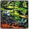 Reflections in a local swamp. #miltonvt