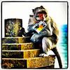 Monkey from #Uluwatu #Bali.