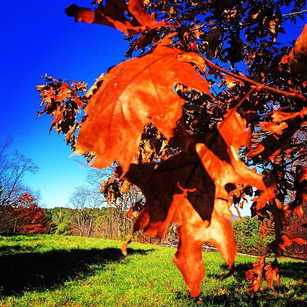 The end of #VT #foliage 2011. #milton
