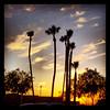 "#clouds #sky #tucson #az #sunset #palmtrees via Instagram <a href=""http://instagram.com/p/YeFSSFiiqs/"">http://instagram.com/p/YeFSSFiiqs/</a>"