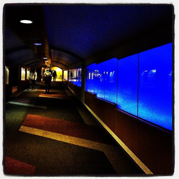 Tunnel in Blue. #btv #vt