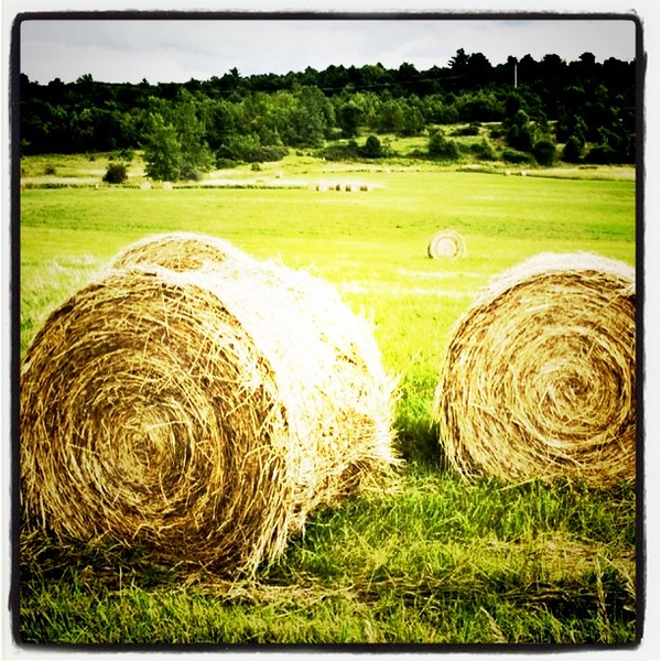 Soon we'll see these hay pills all over #Vermont. #btv #VT