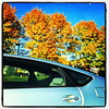 Drive-by #foliage. #milton #btv #vt