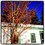 Last Standing Winter Foliage. #quebec
