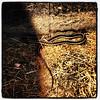 Slithering Creatures. #miltonvt #snake