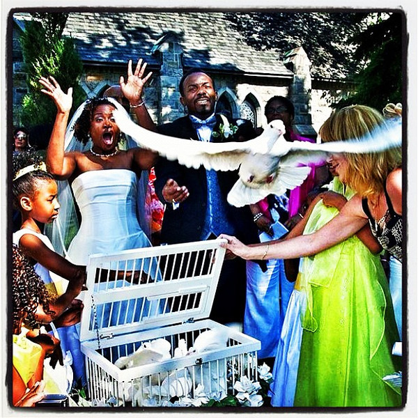 Dove in-flight, excited bride, Priceless! #montreal
