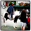 #Seattle's finest, the #horse that is. #police #mountie #law #pikesplace