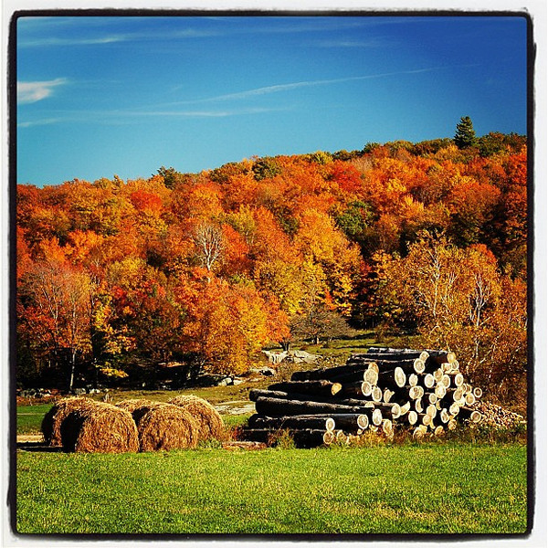 Hay & logs with some awesome #VT #foliage. #btv #milton