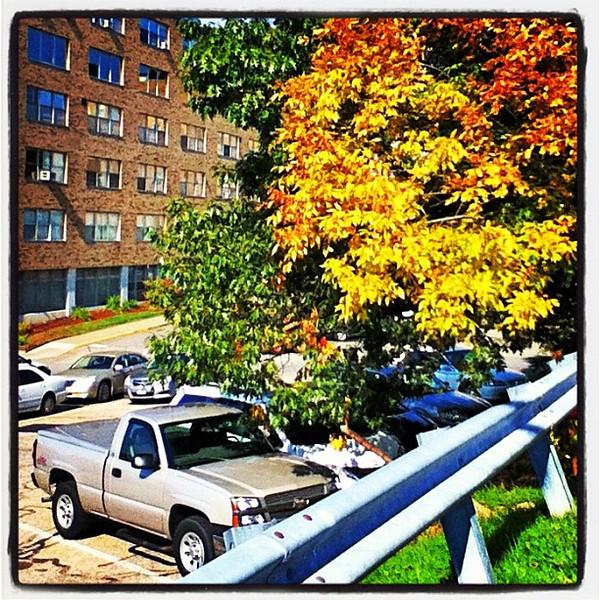 Pretty spot to park. #foliage #btv #vt #fahc #uvm