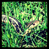 Slithering serpent! Yikes! My kiddo captured this shot in our backyard. #snake