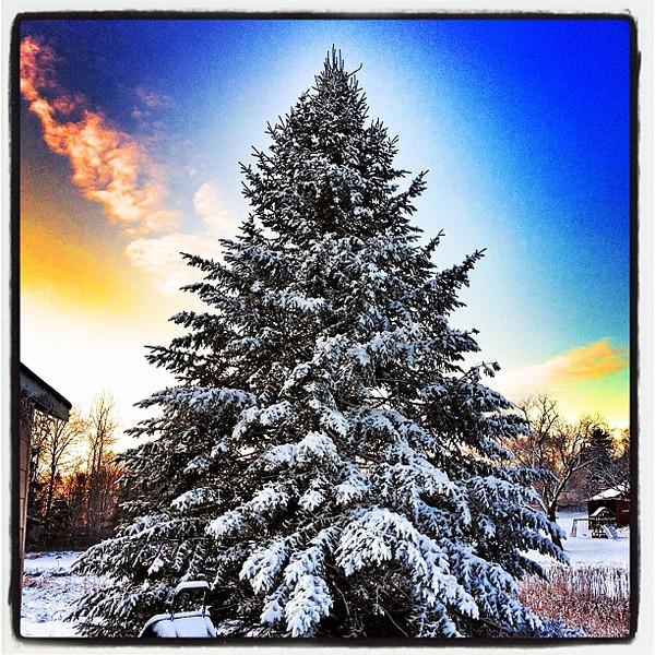Sunrise over a Christmas Tree. #milton #btv #vt