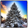 Sunrise over a Christmas Tree. #milton #btv #vt