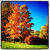 Wonderful #Vermont #Foliage. #VT #btv #Milton #fall #colors