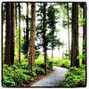 A walk in the woods at #Microsoft.