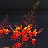 """#tucson#az#arizona#igerstucson#instagramaz #az365#azgrammers#instaaz#igersaz#igersarizona #azcentral#arizonalife#aznature#azscenery #desertscenery#azdesert#flower via Instagram <a href=""""http://ift.tt/1bNJPfY"""">http://ift.tt/1bNJPfY</a>"""