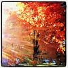 Foliage sun rays. #btv #milton #vt