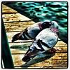 Birds in love!