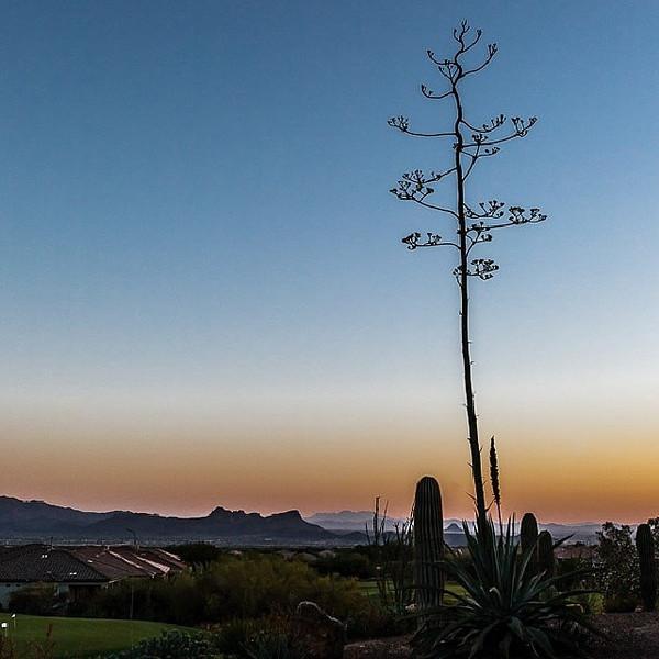 "#tucson#az#arizona#igerstucson#instagramaz #az365#azgrammers#instaaz#igersaz#igersarizona #azcentral#arizonalife#aznature#azscenery #desertscenery#azdesert#clouds#sky via Instagram <a href=""http://ift.tt/1kFQ8bB"">http://ift.tt/1kFQ8bB</a>"