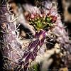 "#tucson #az #cactus via Instagram <a href=""http://instagram.com/p/YzSHD4Ciqm/"">http://instagram.com/p/YzSHD4Ciqm/</a>"