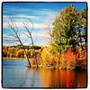 Vermont Foliage. #Milton #btv #VT