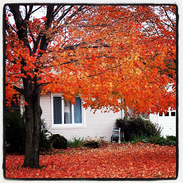 Branching out in color. #foliage #VT #btv