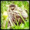 Pretty chick!