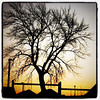 Sunset in #Brampton, #Ontario, #Canada. #silhouette #tree #sunset