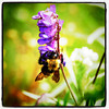 This is how we get honey. #bee #flowers #honey #flora #bug