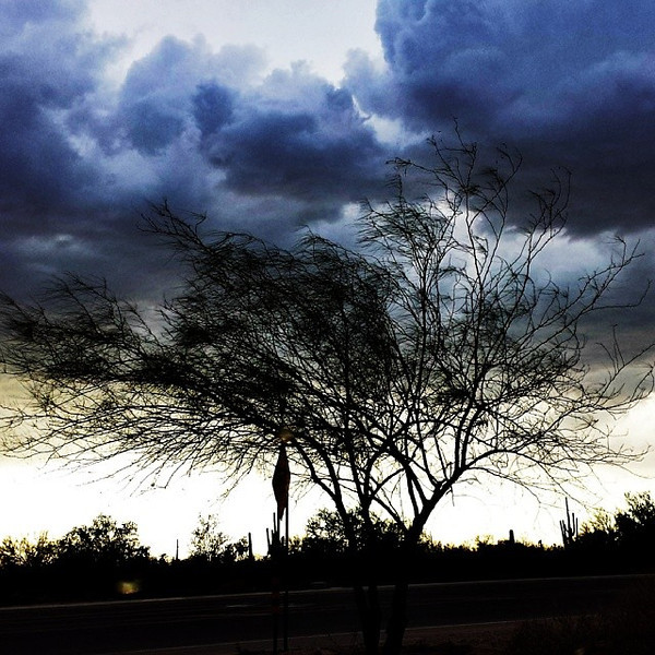 "#tucson#az#arizona#igerstucson#instagramaz #az365#azgrammers#instaaz#igersaz#igersarizona #azcentral#arizonalife#aznature#azscenery #desertscenery#azdesert#clouds#sky via Instagram <a href=""http://instagram.com/p/g9rmyfCijW/"">http://instagram.com/p/g9rmyfCijW/</a>"