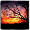 Super delicious #sunset & #silhouette. #btv #VT #Milton #stunning # landscape