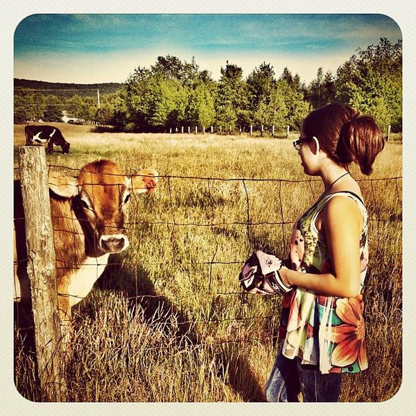 Hello Cow! You wanna play softball? #miltonvt #vt