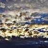 """#tucson#az#arizona#igerstucson#instagramaz #az365#azgrammers#instaaz#igersaz#igersarizona #azcentral#arizonalife#aznature#azscenery #desertscenery#azdesert#clouds#sky #cpc via Instagram <a href=""""http://ift.tt/1p6gxy2"""">http://ift.tt/1p6gxy2</a>"""